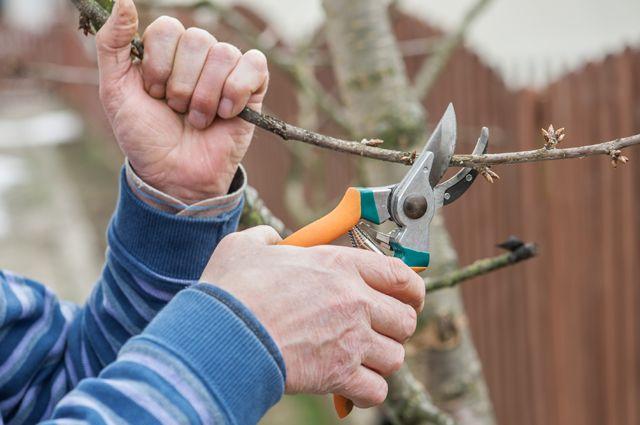 Осторожно, морозобой! Как предупредить повреждение деревьев весной?