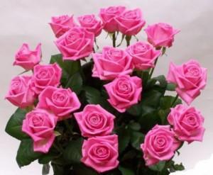 Выращивание домашних роз
