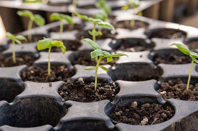 Испытано на себе: изучаем семена от разных производителей